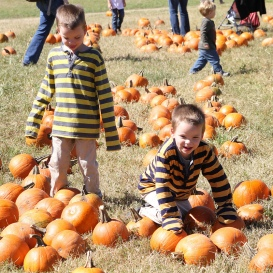 Picking out a pumpkin