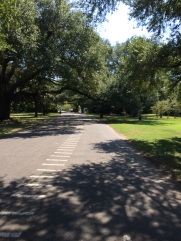 Audubon Park bike ride (solo)