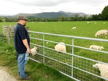 George talking to the sheep