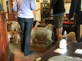 Lots of dogs in this pub.