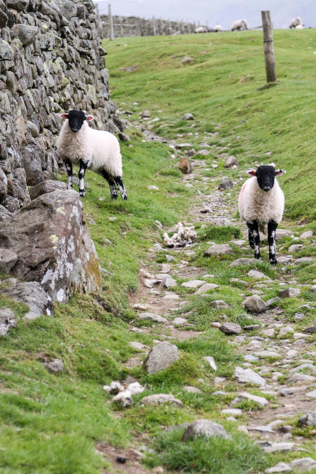 another keswick walk: to castlerigg stone circle – pyjammy dot blog