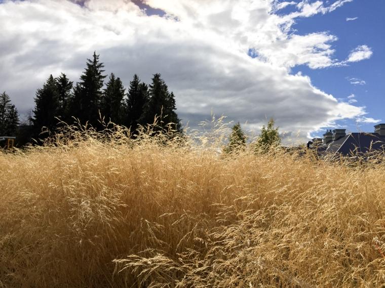 Picturesque grass.