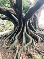 Crazy trees
